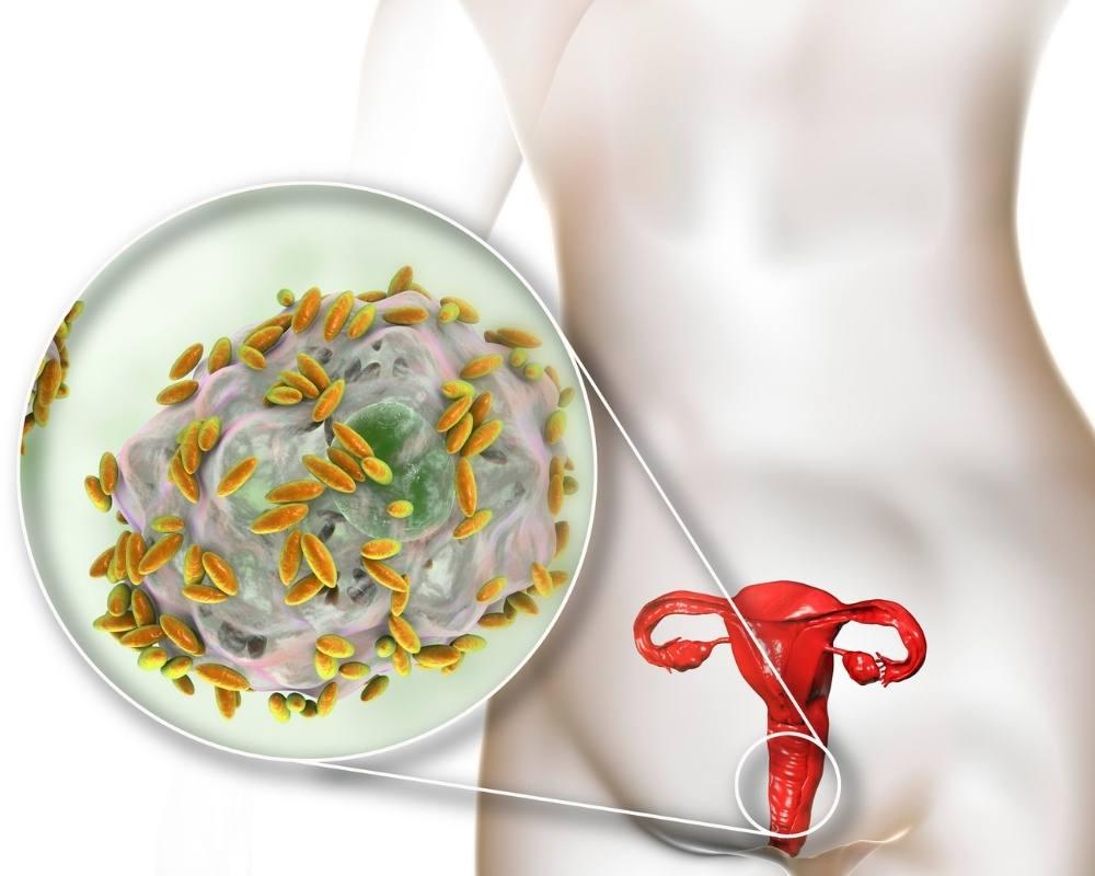 flore vaginale bacterie
